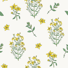 Seamless pattern with St. John s wort medical botanical blossom plant. hand drawn vector colorful texture.