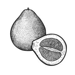 Vintage engraving Pomelo.