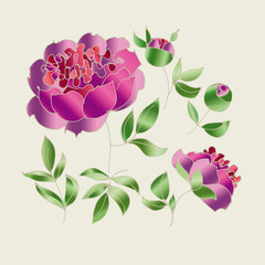 peony sketch vector illustration.  hand drawn spring flower sketch for surface design. luxury floral elements set for web and print.