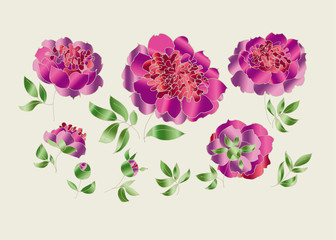 peony sketch vector illustration. hand drawn spring flower sketch for surface design. luxury floral elements set for web and print