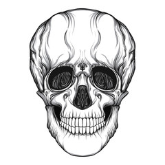 Human skull realistic hand drawing isolated