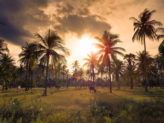 Beautiful landscape of tropical coconut and palm trees with cows on green grass meadow field against sunset with sun flare