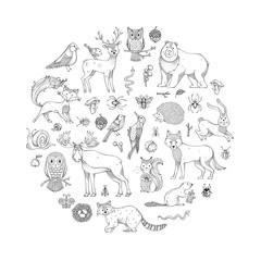 Vector set of doodles wild animals and woodland elements.