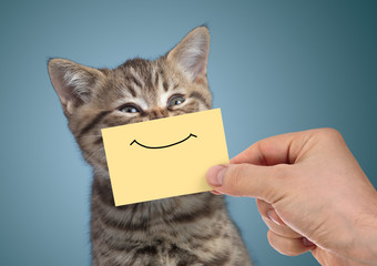 Papier Peint - happy cat portrait with funny smile on cardboard