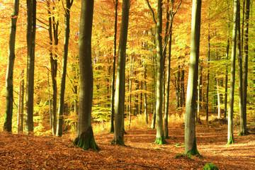 Autumn Forest. Kashubia, Poland