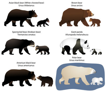 Collection of different species of bears and bear-cubs