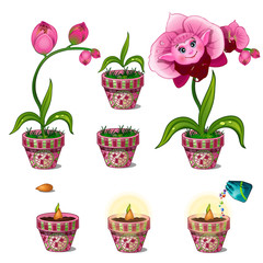 Stages of growth of magical pink flower with face. Seven consecutive pictures. Vector image in cartoon style. Illustration isolated on white background