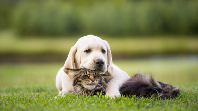cute puppy an cat friendship