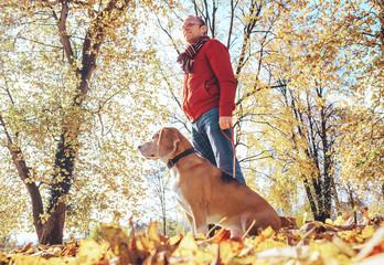 Man walks with dog in golden autumn park