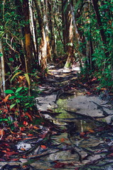 Jungle trails after rain in tropical rain forest of Sabbah, Borneo Malaysia