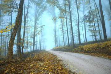 Wall Mural - Magic foggy mysterious gold colored autumn season forest road.