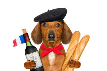 Wall Mural - french  sausage  dog
