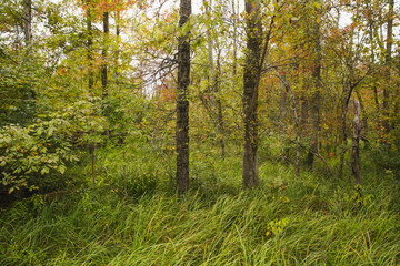 Lowland hardwood forest in the wetland at Bean Blossom Bottoms wetland preserve in Southern, Indiana.