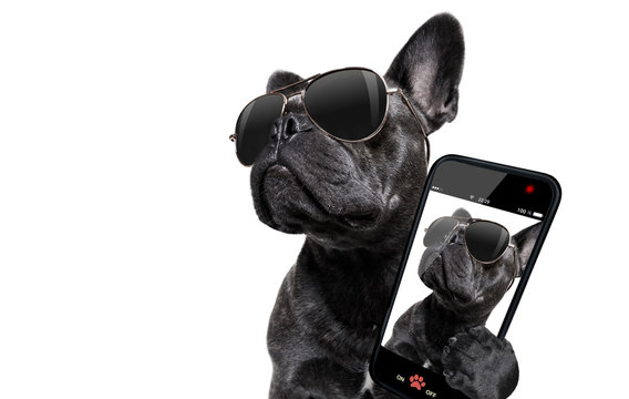 posing dog with sunglasses