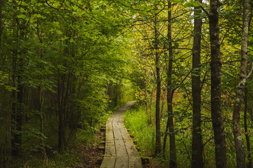 Wooden trail through the wetland at Bean Blossom Bottoms wetland preserve in Southern, Indiana.