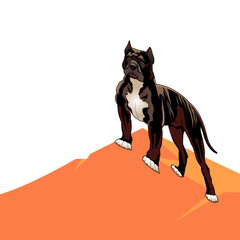 Dog pedigree (Pitbull) on a hill, cartoon on a white background.