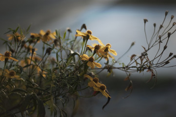 Spindly branches with yellow flowers reach out into the late afternoon light