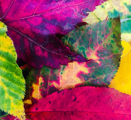 Bright Colorful Fall Leaves