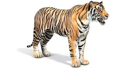 Sumatran Tiger (3D)