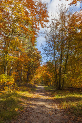Footpath in a Forest in Autumn