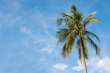 Coconut with sky.