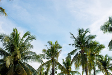 Coconut with sky
