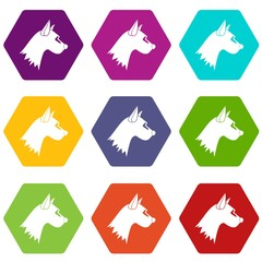 Dog icon set color hexahedron