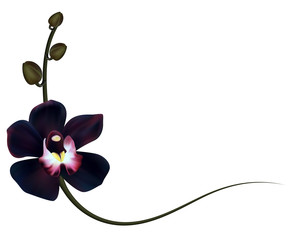 Realistic black orchid frame, corner.