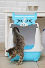 chaton tigré tabby dans litière dans intérieur maison