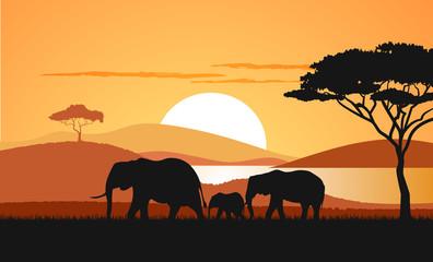 Sunset in the savanna a vector illustration.