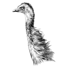 ostrich sketch vector graphics monochrome black-and-white drawing head