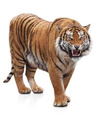 Photo sur Toile Tigre Furious tiger