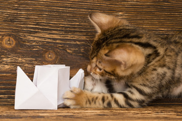 kitten of Bengali breed plays with ship from paper