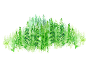 Watercolor group of trees - fir, pine, cedar, fir-tree. green forest, landscape, forest landscape. Drawing on white isolated background.