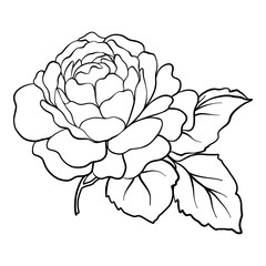 Isolated rose. Outline drawing. Stock vector illustration.