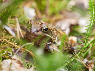 frog in the forest