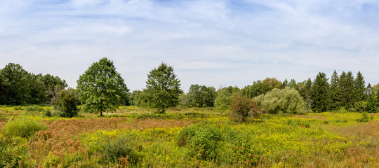 Panoramic photograph of a early autumn meadow.