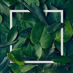 Nature Minimal Concept