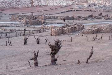 Árboles muertos y ruinas de un pueblo emergido por la sequía en el Embalse de Barrios de Luna, León, España.