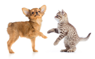 Papier Peint - puppy and young cat standing isolated on white