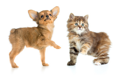 Papier Peint - puppy and young cat isolated on white