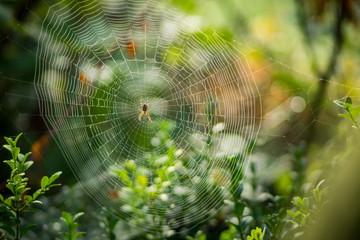 Spinnennetz im Altweibersommer