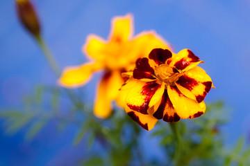 Orange flower is after the rain