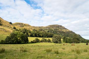 Poster Heuvel Ochil hills near Blairlogie, Scotland