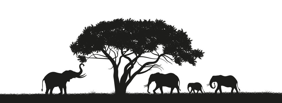 Black silhouette of elephants and trees in the savannah. Animals of Africa. African landscape. Panorama of wild nature. Vector illustration