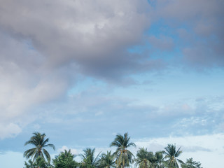 Coconut palm trees and clouds sky with copy space