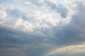 Bird and dense clouds