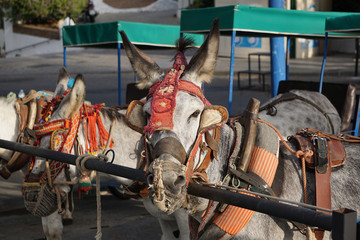 Donkeys in Mijas. Andalusia, Spain.