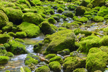 stones in green moss. mountain river in france.