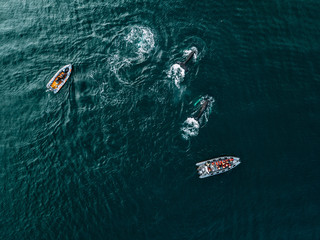 School of humpback whales in the north Iceland ocean sea with two zodiac boats
